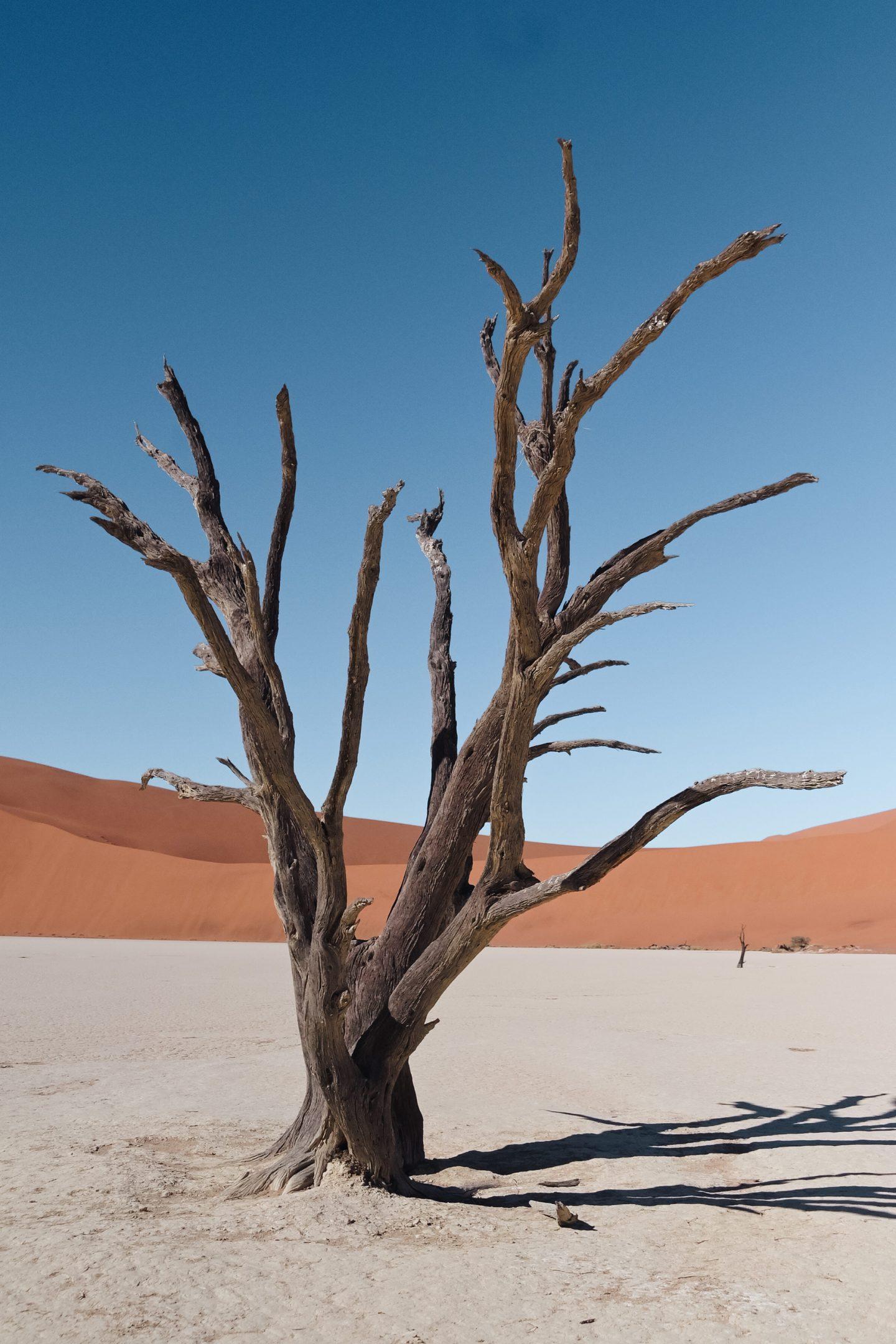 Namibija potovanje kampiranje Deadvlei