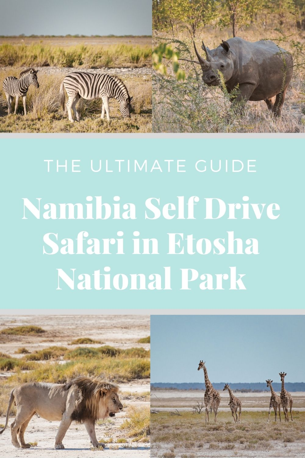 Namibia self drive safari in Etosha National Park guide