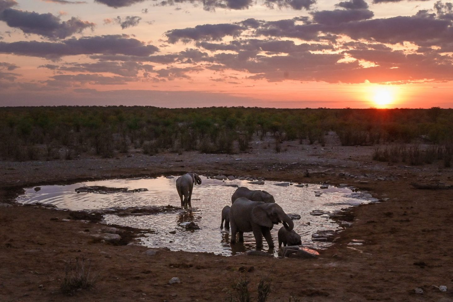 Elephants at Halali Waterhole in Etosha National Park, Namibia