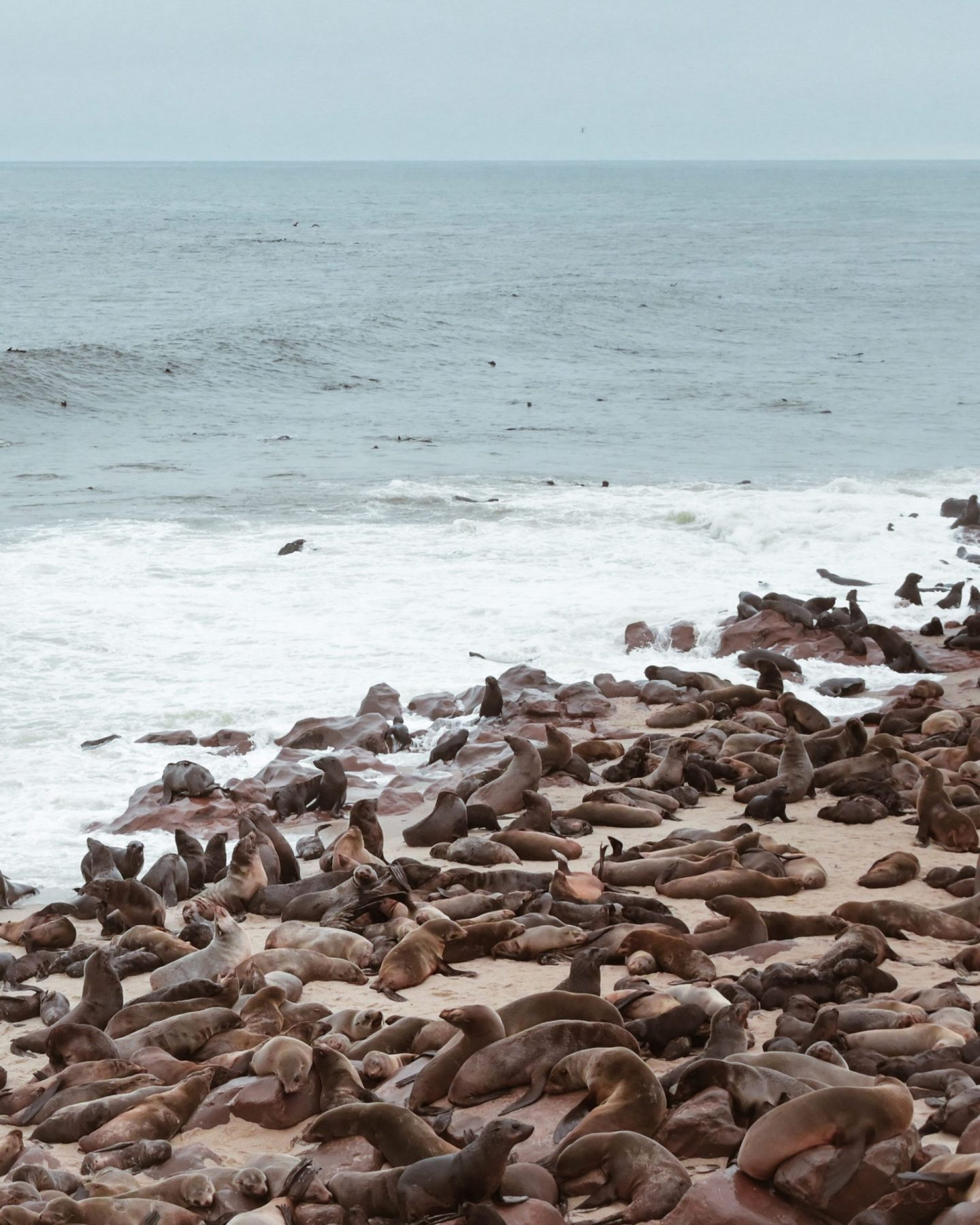 Seals at Cape Cross, Namibia