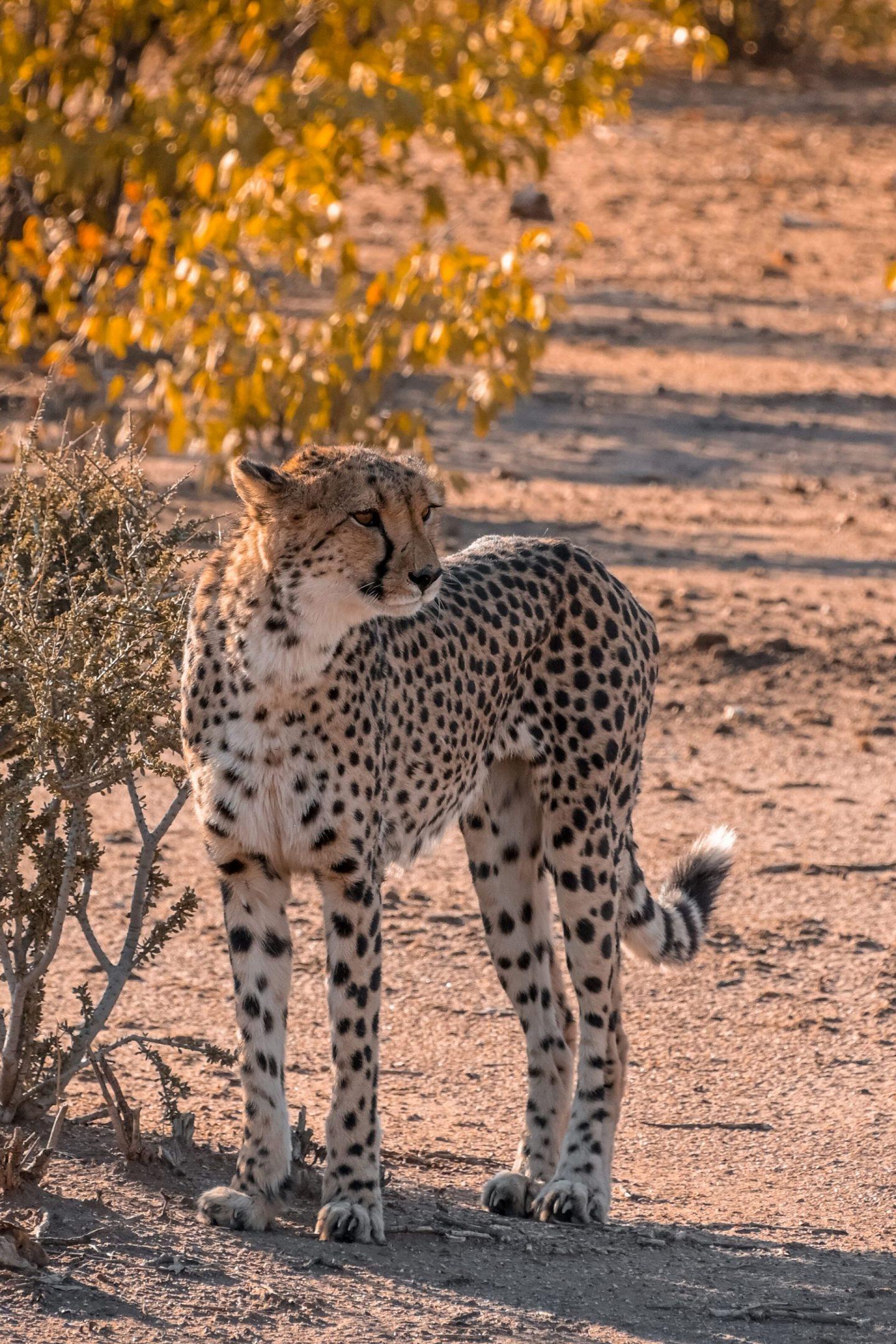 Otjitotongwe Cheetah Park Namibia