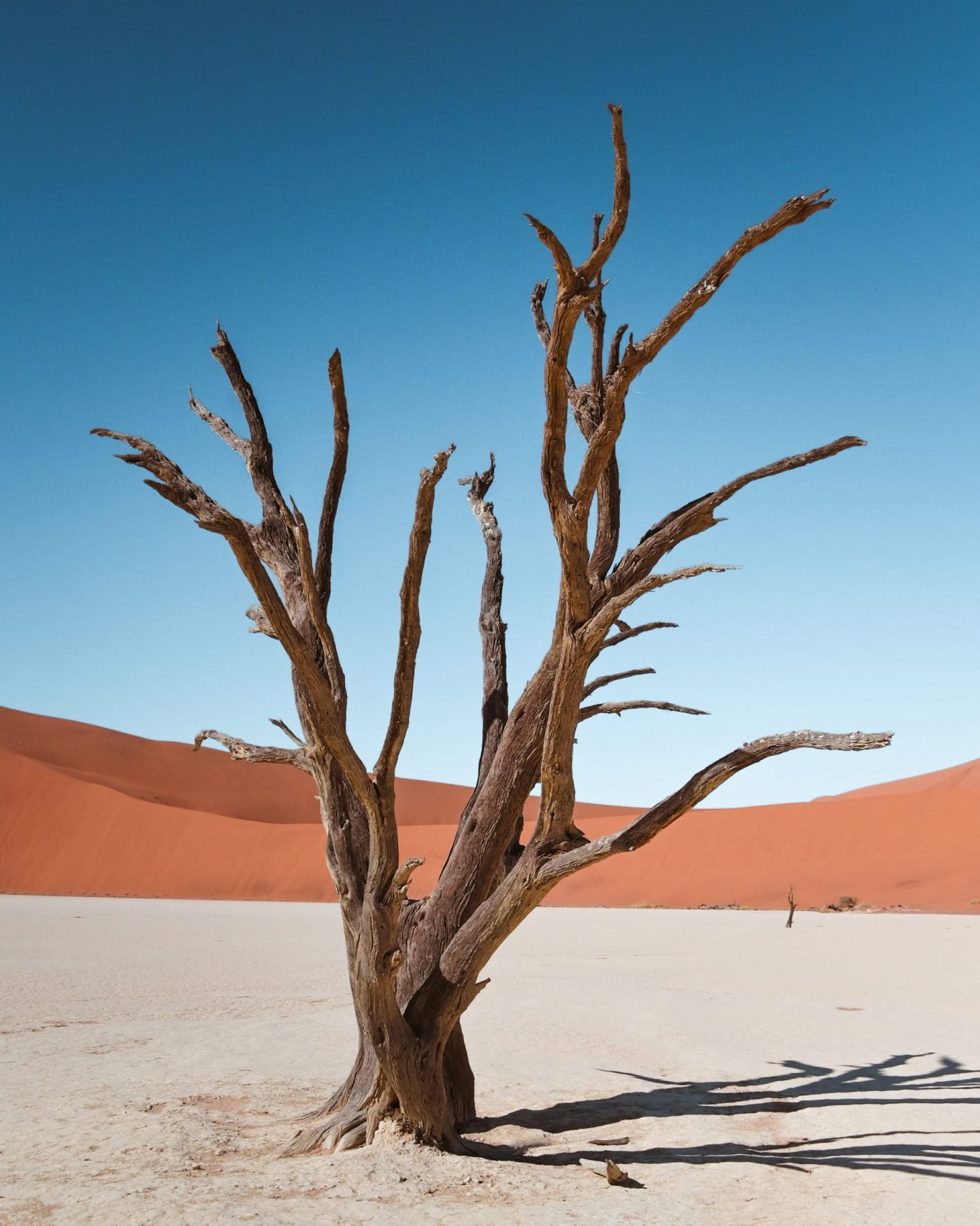 Namibia Deadvlei tree