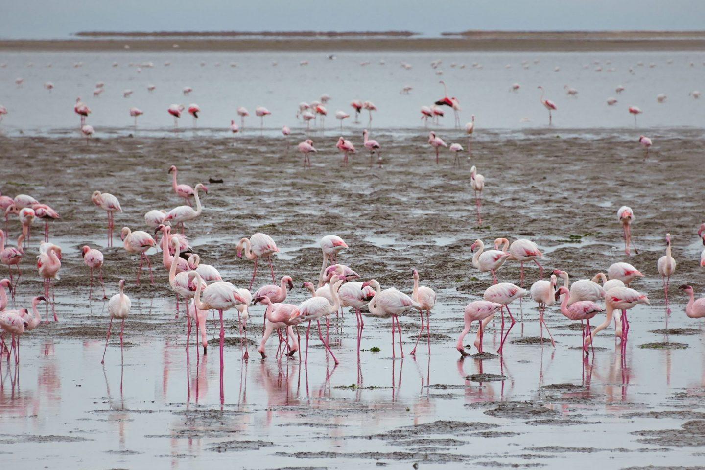 Walvis Bay, Namibija