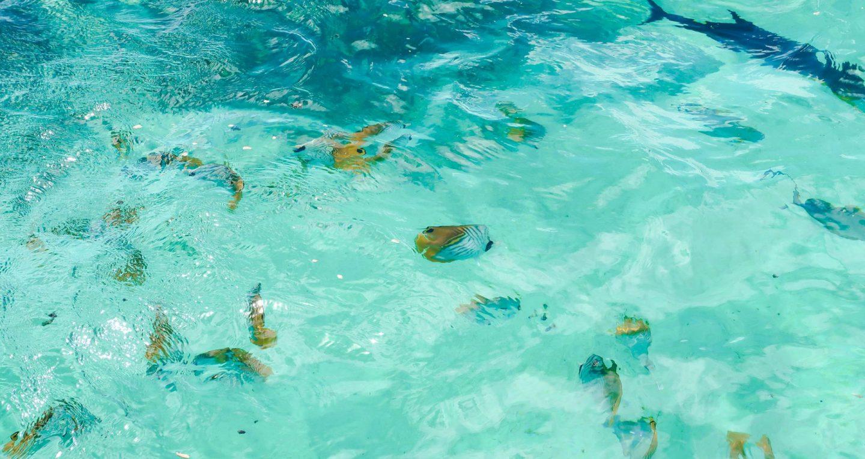 Muri lagoon snorkelling, Rarotonga, Cook Islands