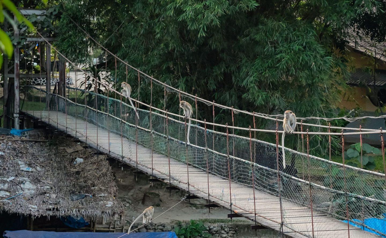 bukit lawang suspension bridge